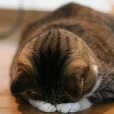 西川18日水曜日お休みを頂いております